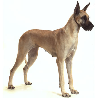 Extra Large Dogs (+41kg)    $24