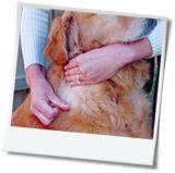 FAQs_search_pets.jpg