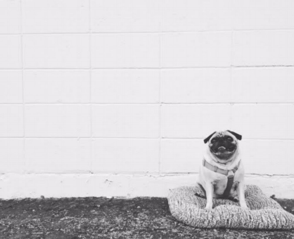 Meet Irie Pug. She is the inspiration behind WAS PAPER, meaning she likes her kibble. That is where WAS PAPER comes into play, always by our side, Irie Pug is sure we are creating only the finest funk. Always down for a ride, her peeper's alert, she enjoys scavenging vintage finds. She makes sure each piece is worthy of a new home. If it's market day and the weather is right, Irie has been known to make an appearance. She loves meeting the wonderful people who support the small business she inspires. Irie looks forward to all the new adventures that the future holds ... while we are restocking the store! Mark your calendars & click the 'catch me outside' to find where we'll be Summer'17. Can't make it to the market? No worries, Irie loves a good hustle, she's well known at the post office, shipping daily. Check out our shop on etsy or send us an email, we love creating one of a kind pieces. Spread the funk! -