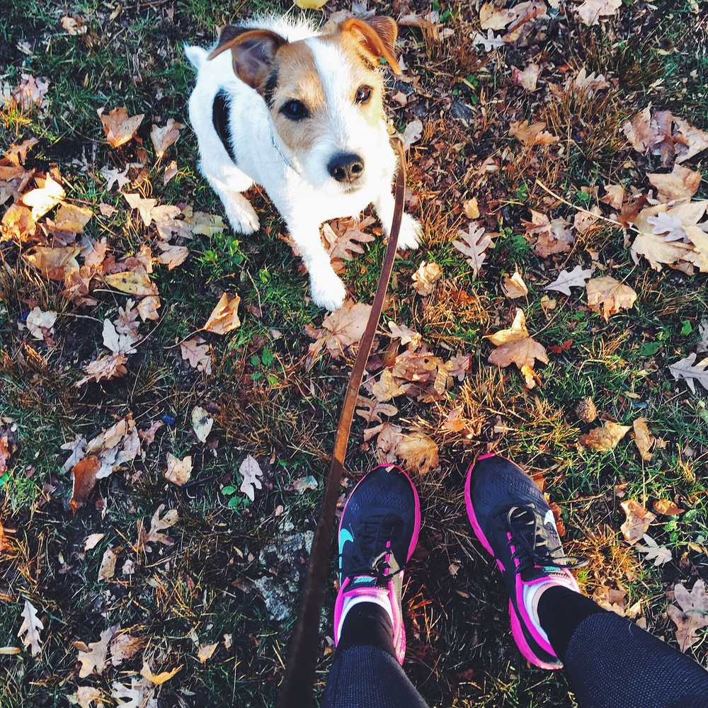 Having a high energy furry friend has always served as a great motivator to get out early and run.