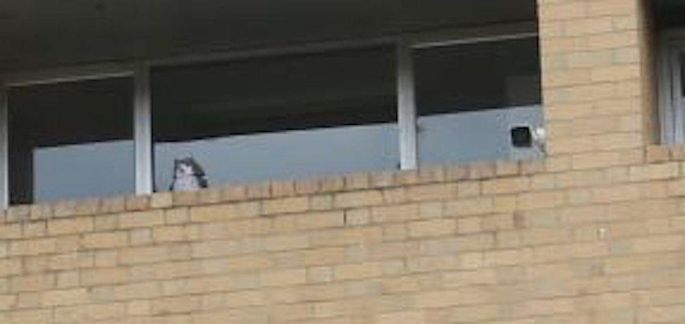 owls roof SU.jpg