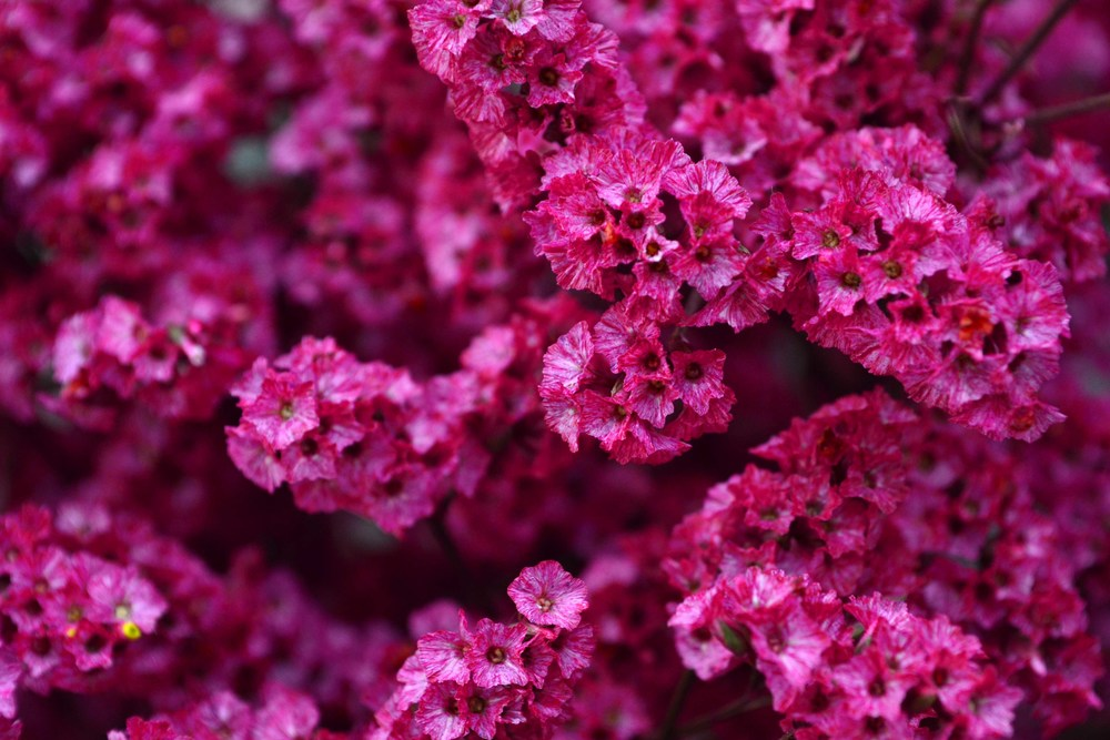 hot pink1.jpg