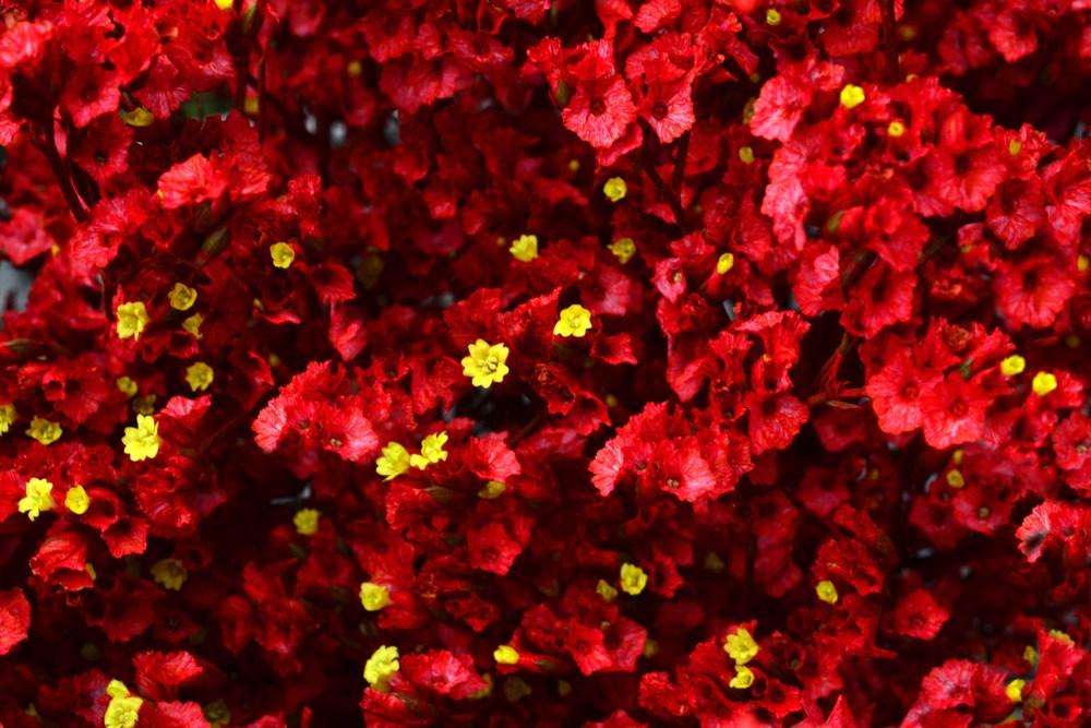 Burgungy red.jpg