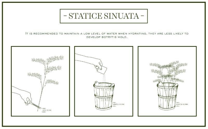 statice-care&handling