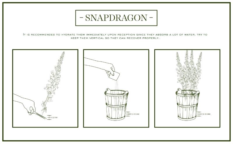 snapdragon-care&handling