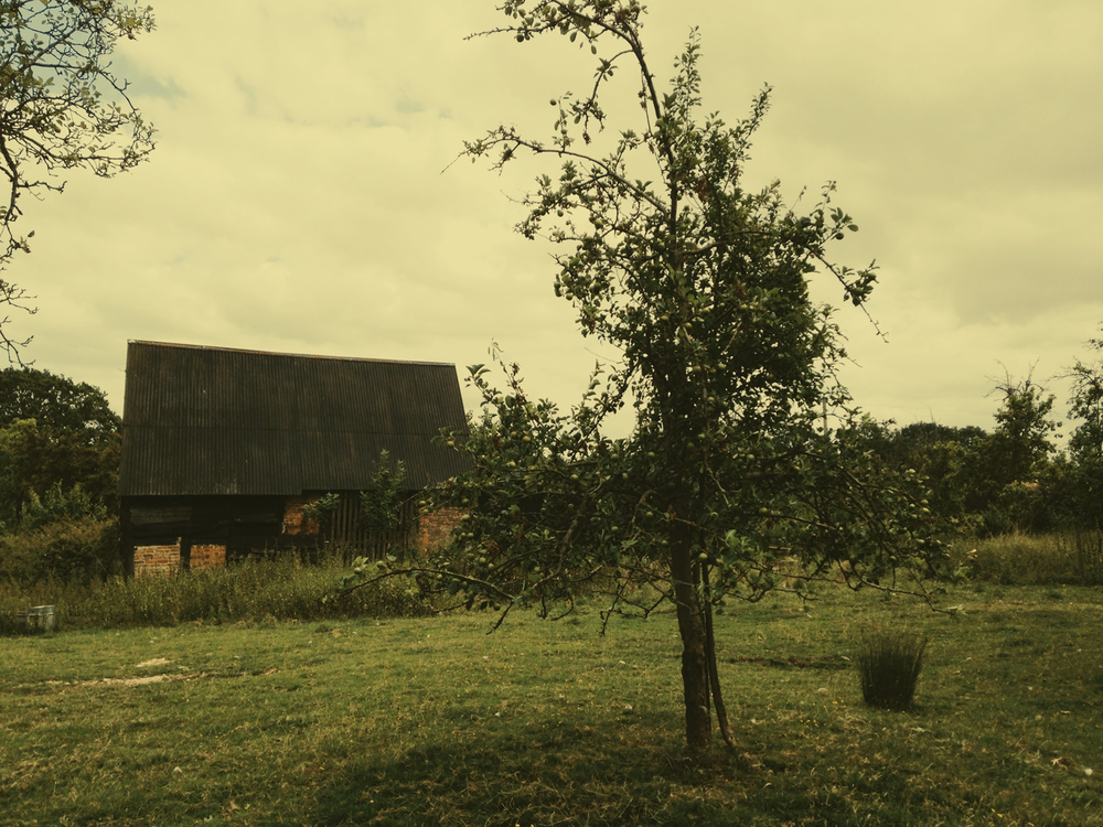 ciderhouse6.jpg