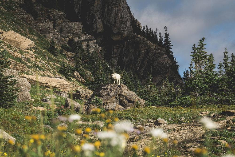 Seattle Banff Montana Glacier National Park Colin Mukri Photographer Meghan Mukri_224.jpg