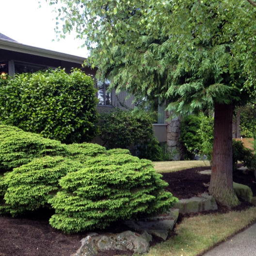 YARD CLEAN-UP We'll get your yard back into form so that it's something more manageable and enjoyable for you. We can bring in bark, weed, mow, prune, and plant. Call or email for a free estimate.