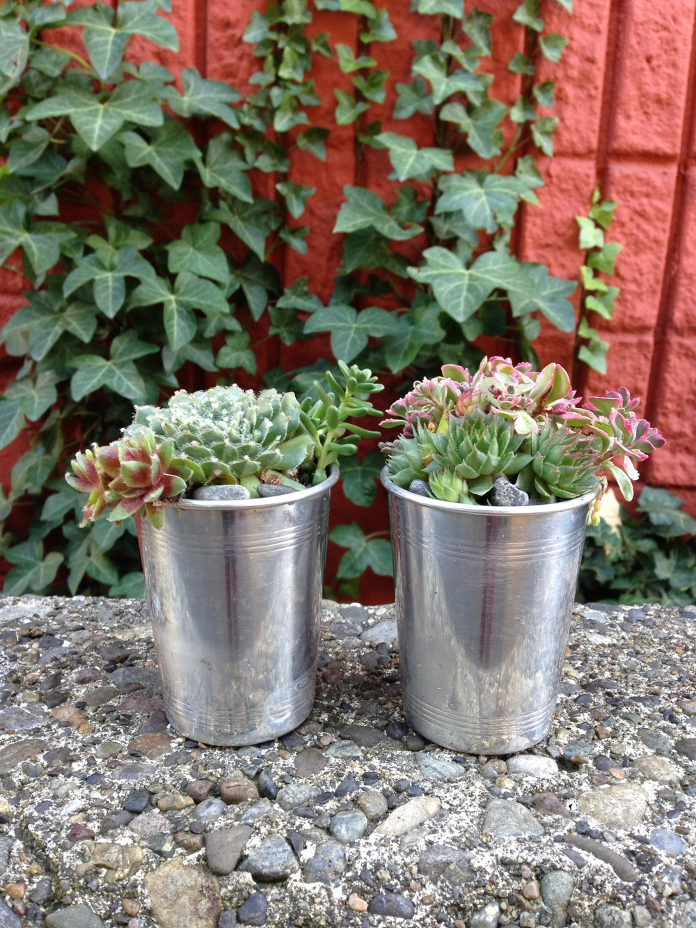 upcycled succulents.JPG