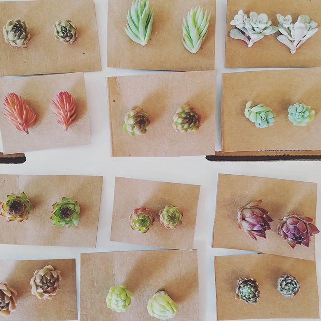 Oh hello little succulent jewels. // Getting ready for the weekend!
