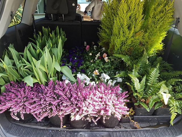 Sun is shining + a car full of color..spring is coming! #springcolor #spruceupyourdeck