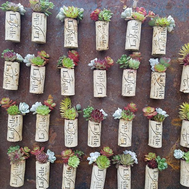 Wedding favors! 113 of these gems heading to the east coast! #weddingfavors #succulents