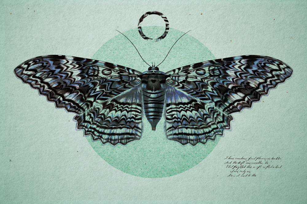 Moth-Design-01.jpg