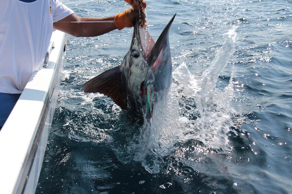 Huatulco Sport Fishing