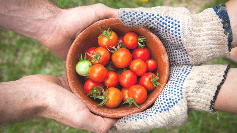 Photo Credit: Elaine Casap via Unsplash - Vit C in tomatoes: 13.7mg/100g