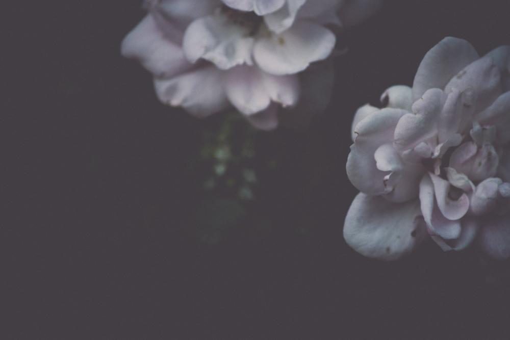 jilltreephoto_web-0089.jpg