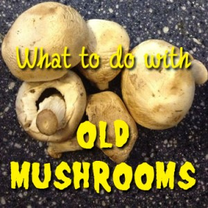 What To Do With Old Mushrooms. by Brown Thumb Mama
