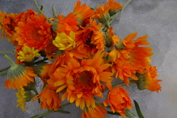 Calendula – The Skincare Herb by Annie's Place