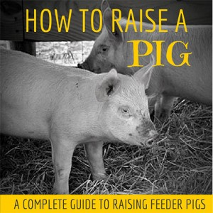 How to Raise A Pig by Our Simple Life