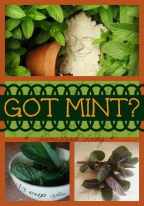 Got Mint? by Homestead Lady