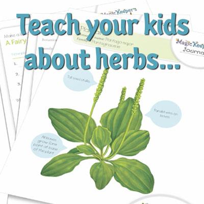 Teach-plantain.jpg