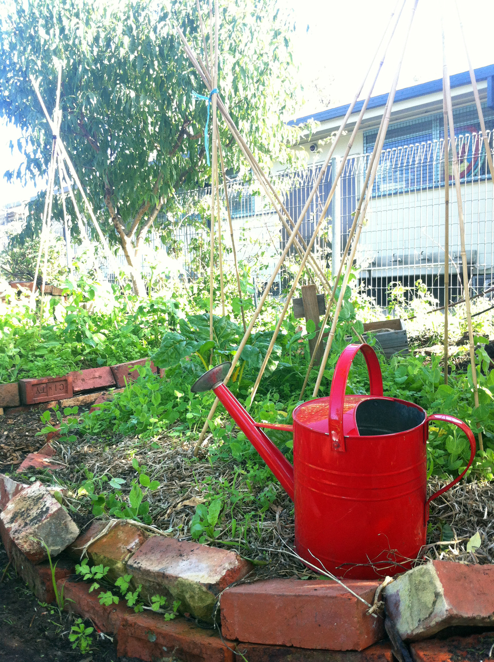 Kitchen Garden Program Kitchen Garden East Bentleigh Primary School