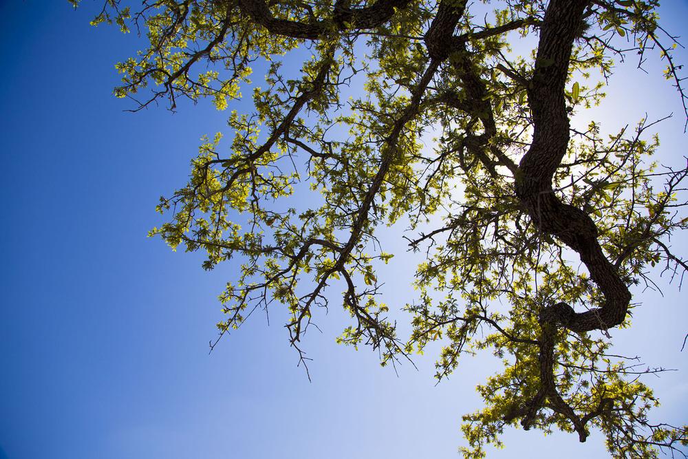 TreeBranch.jpg