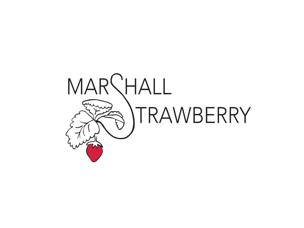 Marshall_logo.jpg