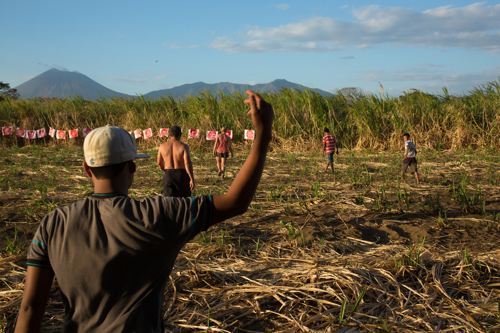 The installation of 'Empalagoso (Saccharine)' in the sugarcane fields of Chichigalpa, Nicaragua