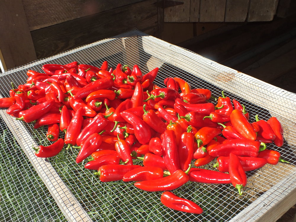 Peppers at Timpson Creek Farm