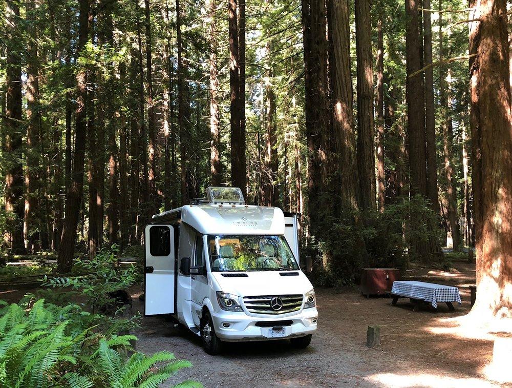 redwoods serenity.jpg