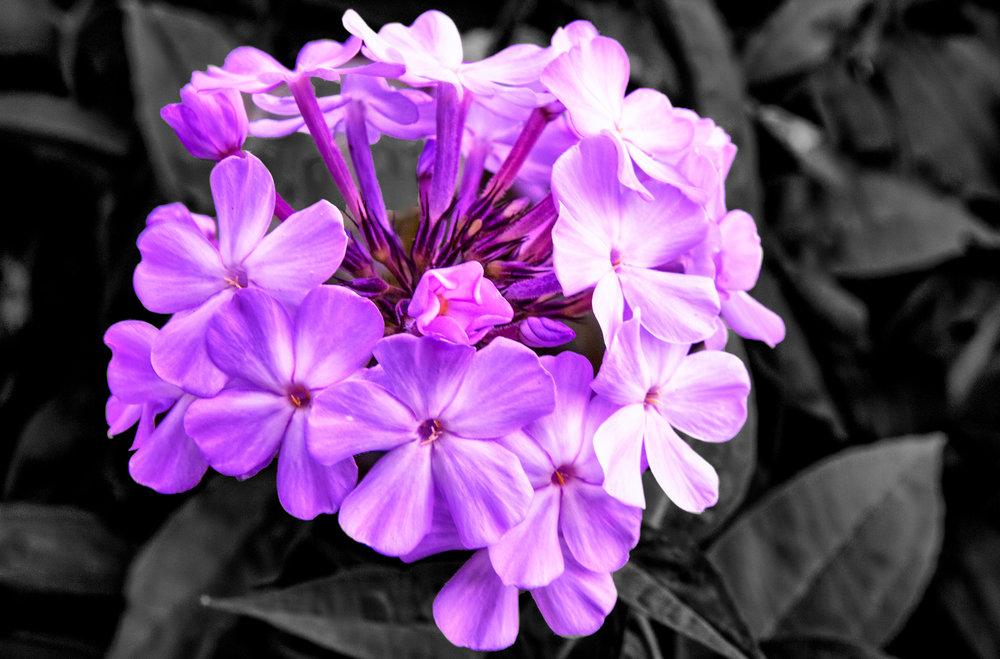 IMG6494_6495_6496_easyHDR-high-contrast.jpg