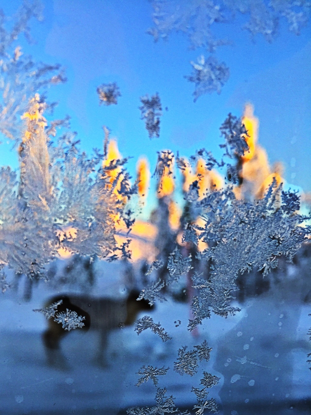 View from the backseat. Frozen window and a reindeer.