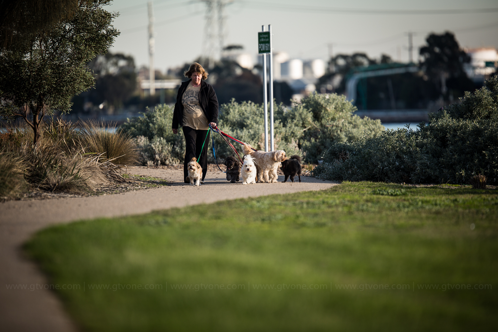 dog walking in port melbourne