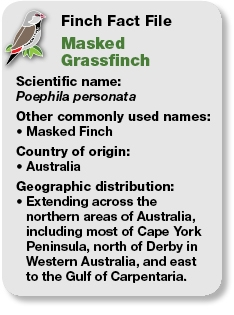 04_Fact_File_Masked_Grassfinch.jpg