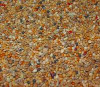 Seed_175x200.jpg