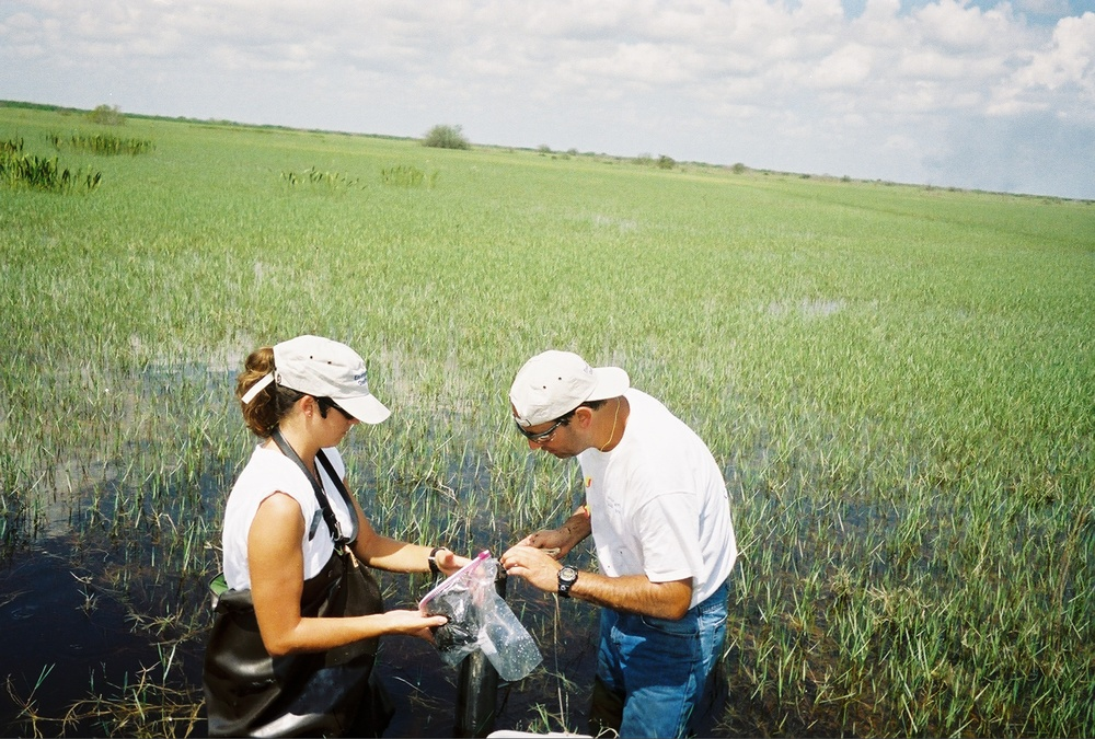 collecting sediment core in torpedo grass.jpg