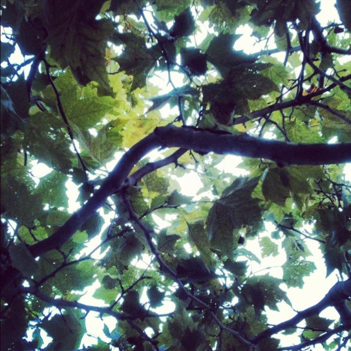leafspread.JPG