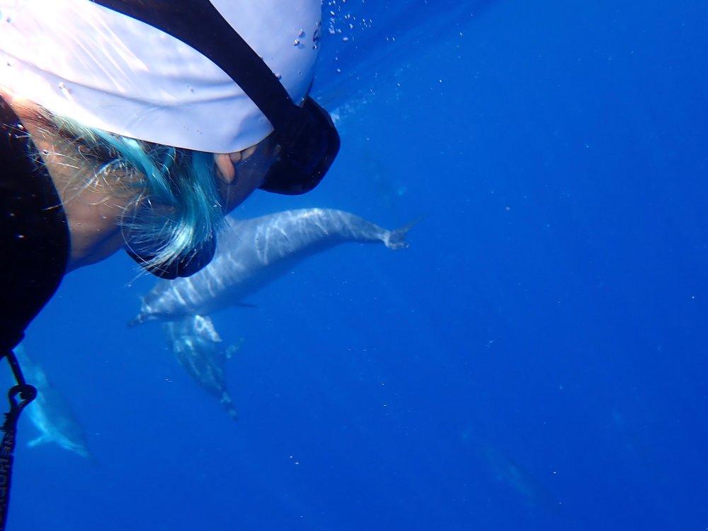 Dolphins swim near me - a selfie