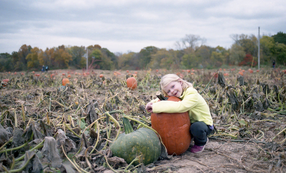 Pumpkin Patch_FujiNatura1600Canon650ZeissFlektogon35mm2.4_BradLechner.jpg