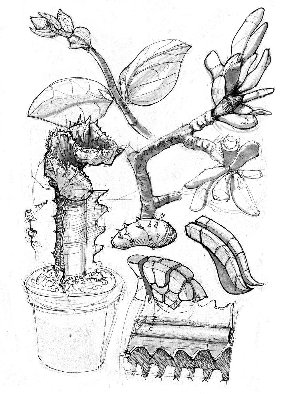 PlantStudies.jpg