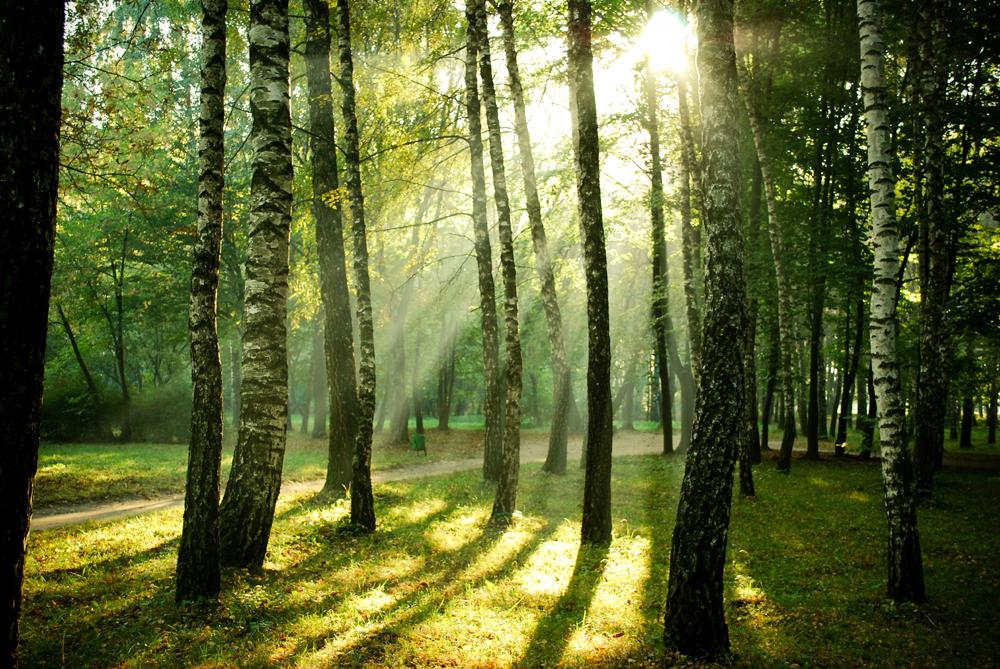 Slider-über-uns-Wald1.jpg