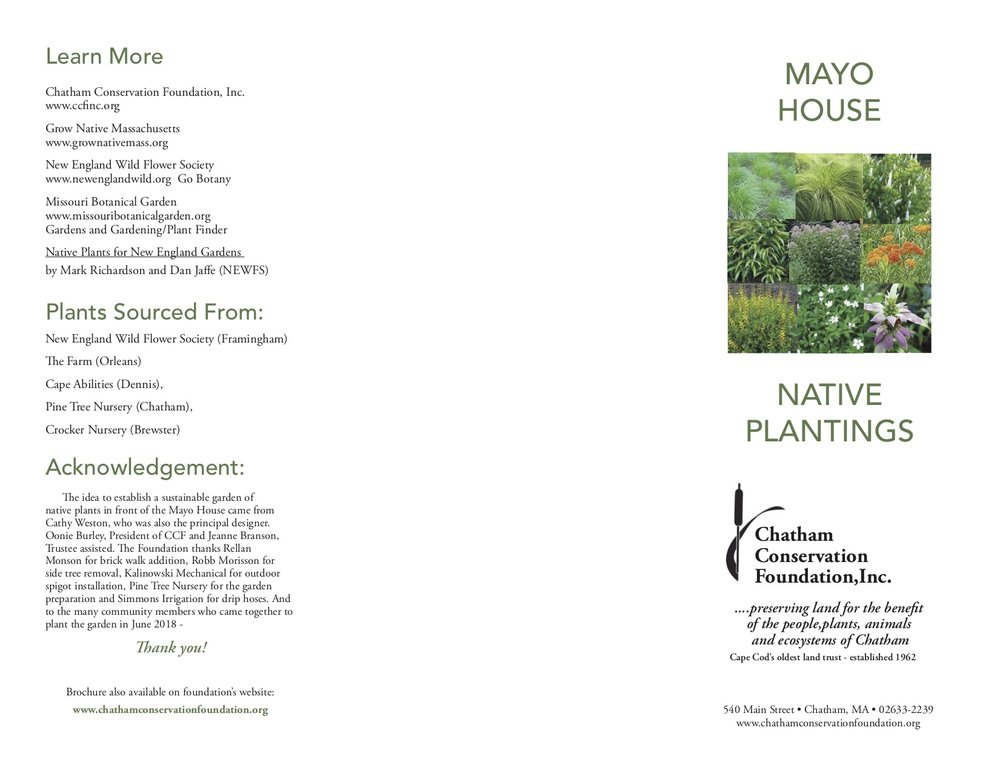 Native Plantings at Mayo2.jpg