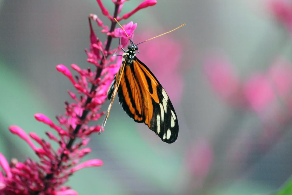 """""""Monarch Butterfly"""" - Erica Christiansen"""