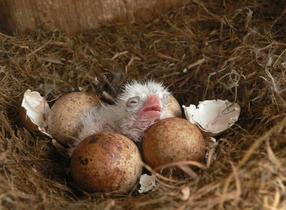 hatching day - Karl Miller.jpg