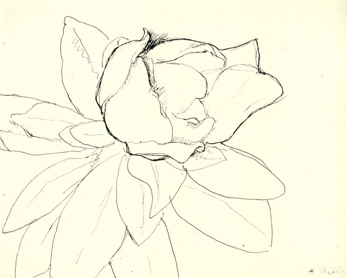 Henri Matisse, Magnolia, c. 1900. Pen and ink on paper, 20.9 x 25.7 cm. Private Collection.