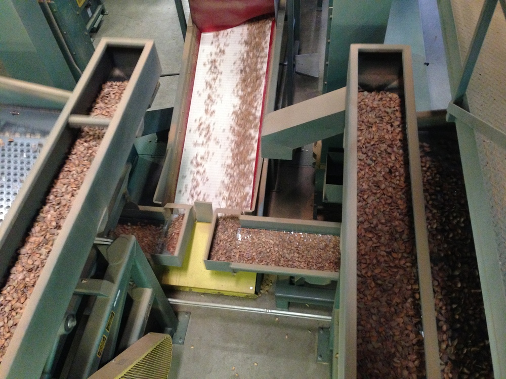 The almond selection process