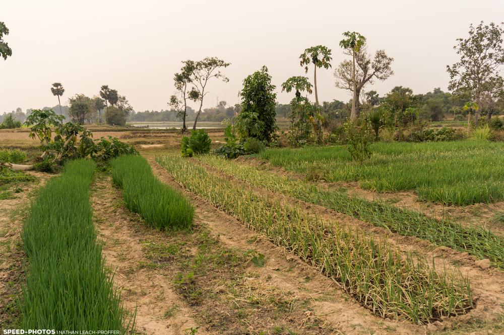 cambodia farm