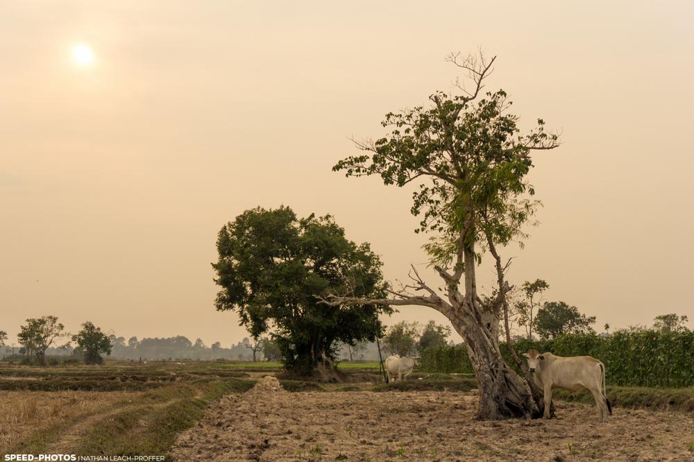 cambodiafield