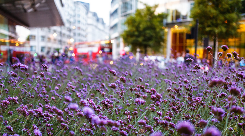 Flowers in London